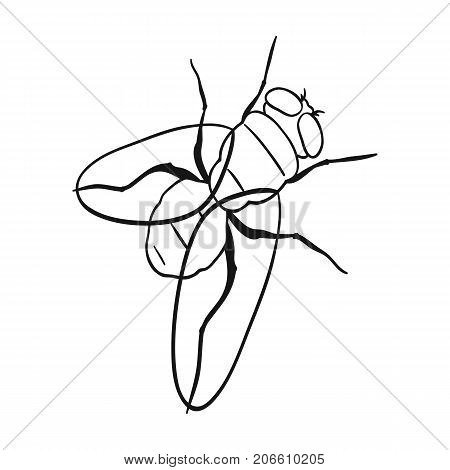 The fly is ordinary.Dipterous insect fly single icon in outline style vector symbol stock isometric illustration .