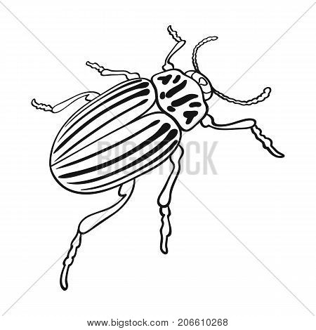 Colorado beetle, a coleopterous insect.Colorado, a harmful insect single icon in outline style vector symbol stock isometric illustration .