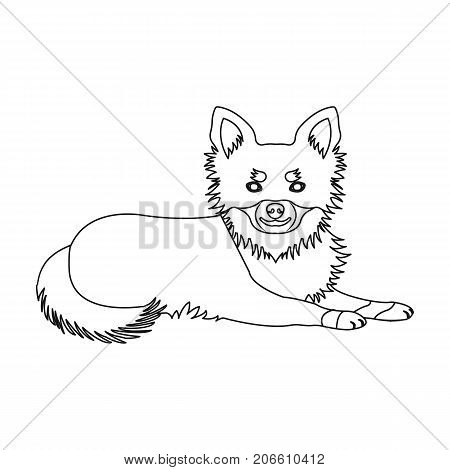 A pet, a lying dog. Pet, dog care single icon in outline style vector symbol stock illustration .