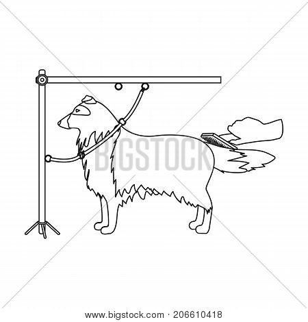 Combing a pet's fur, a dog in a stylish salon. Pet , dog care single icon in outline style vector symbol stock illustration .