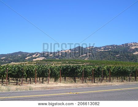 Wine country in the California Valley outdoors.