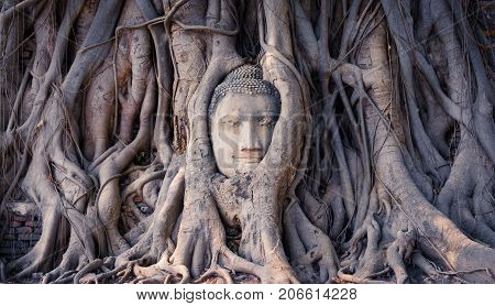 Head of a Buddha statue enclosed in the roots of a sacred fig tree in the ruins of Wat Mahathat temple in Ayutthaya ancient city Thailand.