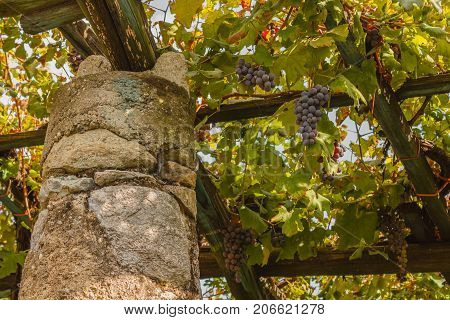 a   characteristic pylon stone and lime of the vineyards of the famous Piedmontese wine Nebbiolo Carema D.O.C (Italy) / they  store the heat of the sun and release it overnight at the clusters
