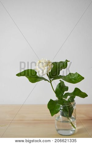 White flowers in a glass vase on a brown wood table Jasminum sambac in scientific name and space for text - Tropical Asia flower