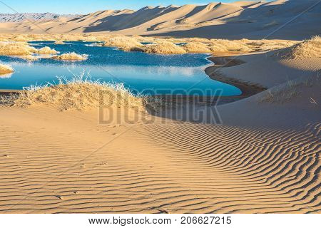 beautiful morning landscape of desert with little oasis