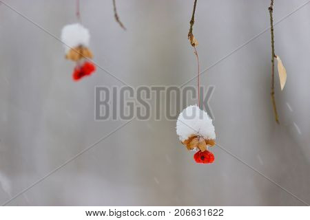 Poisonous Red Berry In Winter Forest