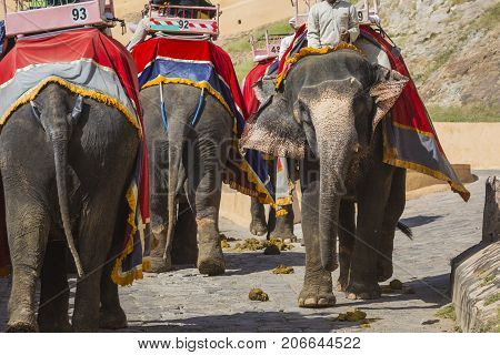 Decorated elephants in Jaleb Chowk in Amber Fort in Jaipur India.