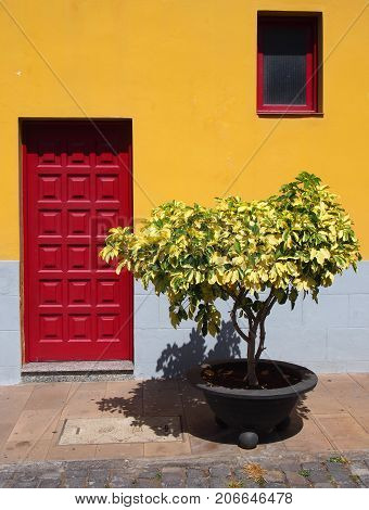 traditional bright yellow house in tenerife with red wooden paneled door and single window with small bush or pland in a pot outside on a summer day with sunlight and shade