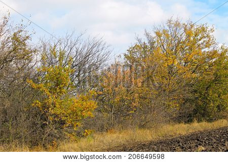 Deciduous Forest On Autumn