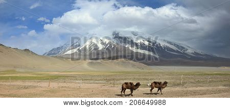 Muztagh Ata hill, the second highest of the Kunlun mountains in Xinjiang Uighur Autonomous Region of China and two camels in the foreground.