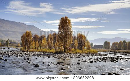 Yellow orange autumn trees in the valley growing beside streaming river with small rocks and hills at the background in Yading national level reserve Daocheng Sichuan Province Shangri la China.