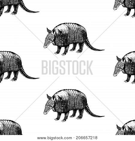 Hand drawn background with armadillo. Vector seamless pattern. Vintage style. Doodle line graphic design. Black and white drawing mammal. Vector sketch.