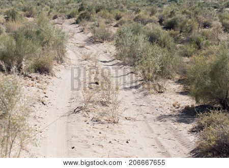road in the steppes of Kazakhstan . In the park in nature