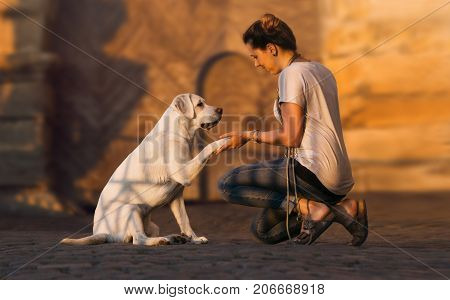 young beautiful woman and cute labrador retriever dog puppy give themselves a high five with hand and paw