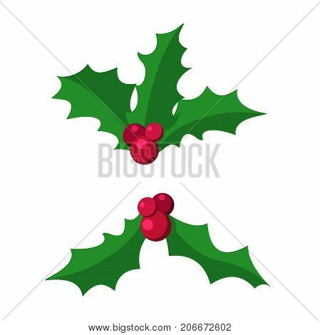 sprig of Holly.European Symbol Of Christmas.Branch Of Holly.Green Leaves and Red Berries of Ilex aquifolium.European Holly traditional Christmas decoration.Vector Illustration Isolated from Background