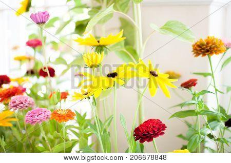 Beautiful arangement of vibrant colorful spring flowers bright