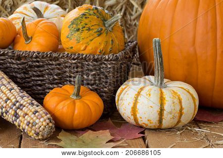 Colorful pumpkins and gourds on a wooden background