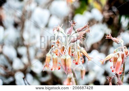 White and orange flower in meadow field garden wilted wilting drooping