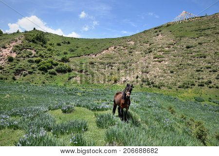 The horse standing on the grassland with string prayer flags up along the hills.