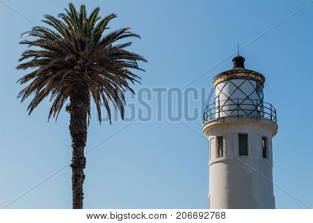 RANCHO PALOS VERDES, CALIFORNIA - JULY 9, 2017:  A palm tree stands beside the historic Point Vicente lighthouse built in 1926 and now owned and operated by the U.S. Coast Guard since 1971.