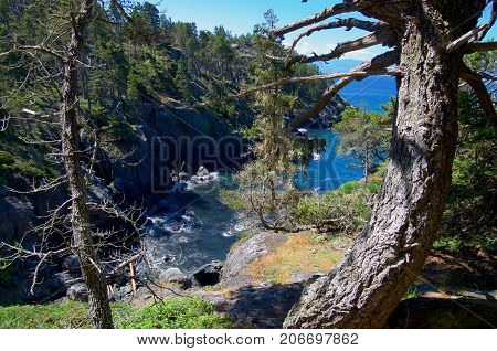 Sea cliffs and the waters of Juan de Fuca Strait are framed by gnarled coastal firs on the coast trail of East Sooke Regional Park Vancouver Island BC. Taken on a sunny day in June with a wide angle lens.