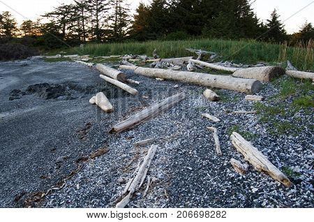 a shell beach in the setting sun on Spring Island near Vancouver Island. Wide angle photo showing shells driftwood beach grass and trees.