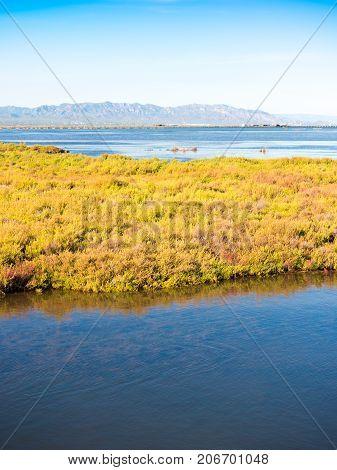Ebro Delta Estuary And Wetlands, Tarragona, Catalunya, Spain. Copy Space For Text. Vertical.