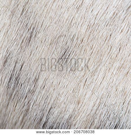 background of the dog's coat . Photo of abstract background