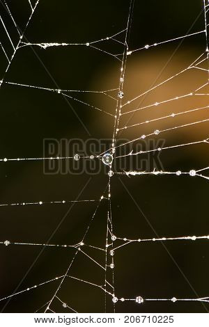 spider's web. close-up . In the park in nature