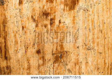 old wooden background . In the park in nature