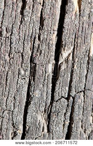 old wooden background . Photo of abstract background