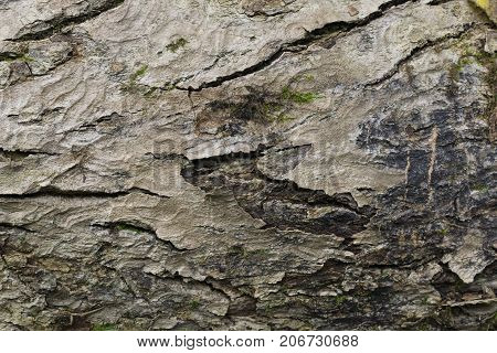 Close-up of a Tree Bark in the Forest. View on a Tree Bark.  Natural Nature background Textures
