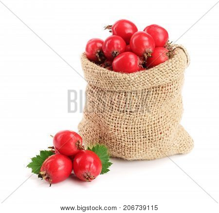 Hawthorn berry with leaf in burlap bag isolated on white background close-up.