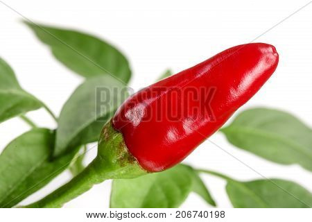Red chili pepper with leaf isolated on a white background no shadow.