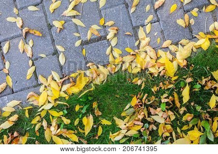 Yellow Fallen Autumn Leaves on the on the Sidewalk Paved with Gray Concrete Paving Stones and Grass Lawn Top View. Autumn Approach Season Change Concept