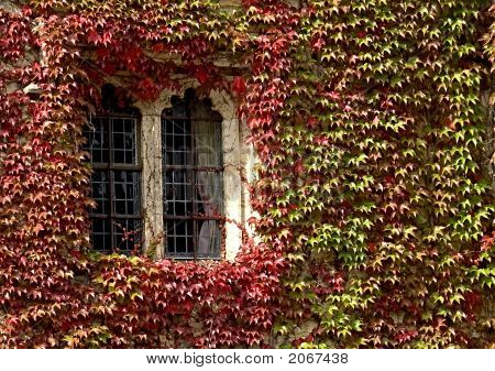 Leaves Around A Window