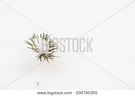 Very small pine In The Snow In Winter. Minimalism, space for text. Modern winter background