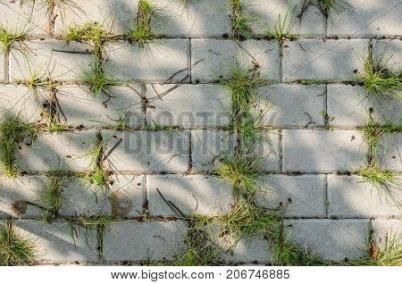The Grass Grows Between the Paving Slabs. Paving Footpath in the Shade of a Tree with Spots of Sunlight
