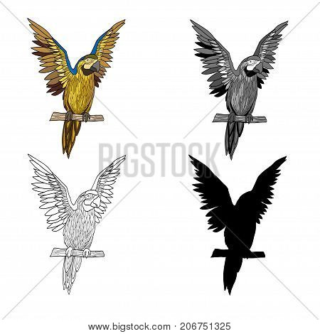 Vector illustration of an image of a parrot with raised wings. Black line black and white and gray spots black silhouette color image