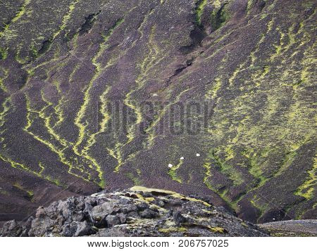 Green moss on the surface of a mountain in the Landmannalaugar valley Iceland