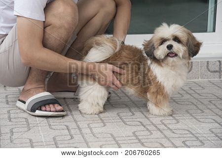 A man holding a cute little brown Shih-Tzu dog