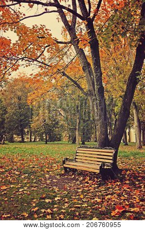 Autumn landscape. Wooden lonely bench under the yellowed autumn trees in the autumn deserted park. Autumn park in cloudy weather. Autumn park landscape. Autumn nature scene with autumn trees and fallen autumn leaves