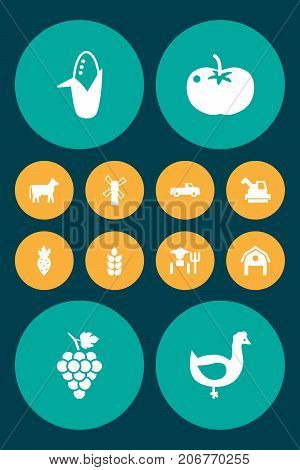 Collection Of Vegetable, Grower, Kine And Other Elements.  Set Of 12 Harvest Icons Set.