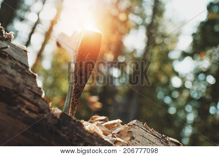 Close Up Axe Sticking Out Of Wood. View Of Acute Ax In Tree. Sunlight Effect