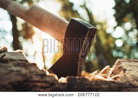 Closeup View Of Ax In Big Fallen Tree. Acute Axe In Wood. Blurred Background, Sunlight Effect