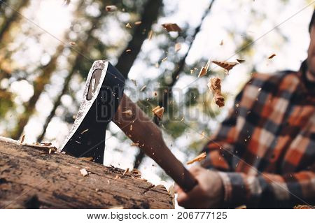 Woodcutter In Plaid Shirt Chopping Tree In Forest. Wood Chips Fly Apart