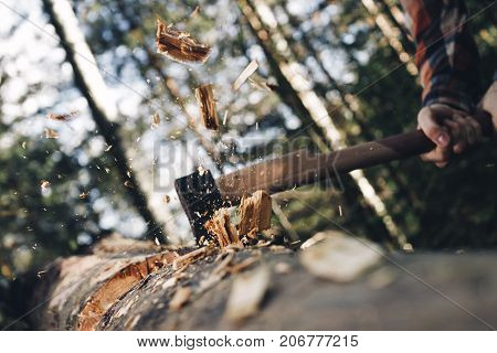 Brutal Lumberjack Cuts Forest With Sharp Ax, Chips Scatter In Different Directions