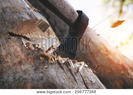 Tree Chopping And Sharp Ax Close Up. Lumberjack With Acute Axe Cuts Tree. Wooden Chops Fly Apart. Co