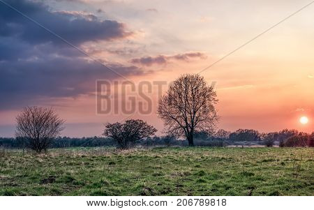 Sunset with incoming clouds over a meadow. A tree and bushes silhouette against the brighter sky.