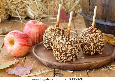 Caramel apples coated with nuts on a wooden plate